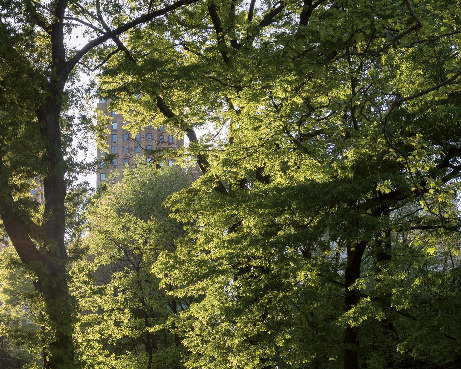 Exposition Ville-Forêt 2020