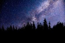 Ciel nocturne et sapins