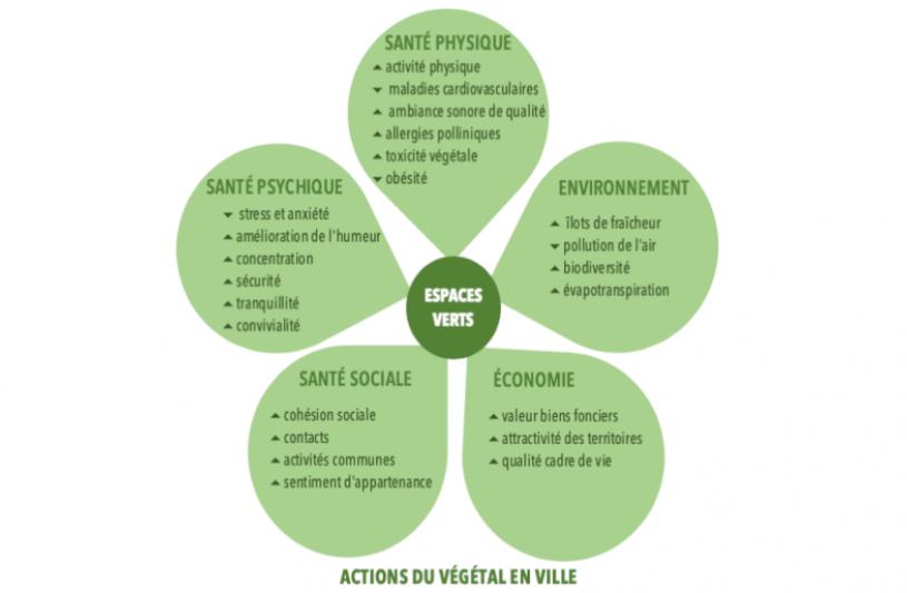 action-du-vegetal-en-ville.png